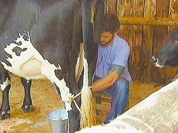 Dado Dolabella tira leite de uma vaca durante o reality show