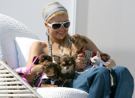 Paris Hilton leva seus sete cachorrinhos para passear na praia (1/8/2007)